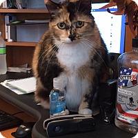 Adopt A Pet :: Cordelia - Woodward, OK