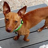 Adopt A Pet :: Peabody - Atlanta, GA