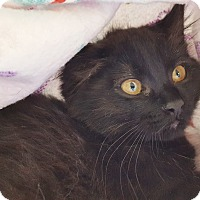 Adopt A Pet :: Tularosa - Colorado Springs, CO