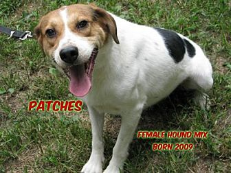 Hound (Unknown Type) Mix Dog for adoption in Huddleston, Virginia - Patches