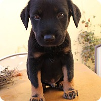 Adopt A Pet :: Remy - Thousand Oaks, CA