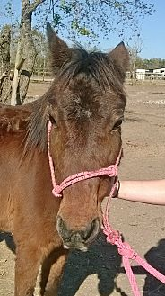 Quarterhorse Mix for adoption in Hitchcock, Texas - Kylie