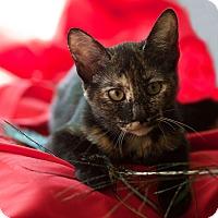 Adopt A Pet :: Jasmine - Avon, NY