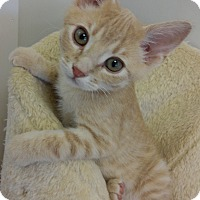 Adopt A Pet :: Casper - Cloquet, MN