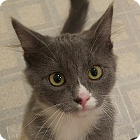 Adopt A Pet :: Earl Grey - Midvale, UT