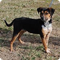 Adopt A Pet :: Jinx - Parsons, KS