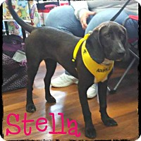 Adopt A Pet :: Stella - WESTMINSTER, MD