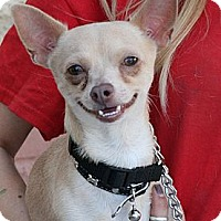 Chihuahua Mix Dog for adoption in Palmdale, California - Donnie