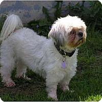 Adopt A Pet :: Jillie - Rigaud, QC