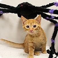 Adopt A Pet :: Percy - Sacramento, CA