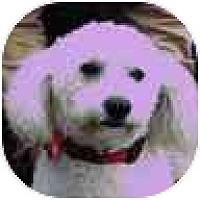 Adopt A Pet :: Cara - La Costa, CA