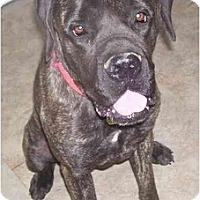 Adopt A Pet :: Kara - Chandler, IN