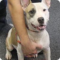 Adopt A Pet :: Marge - Waycross, GA