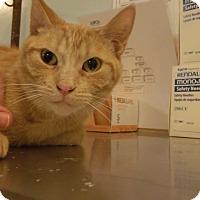 Adopt A Pet :: fiza - Muskegon, MI