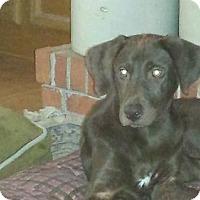 Adopt A Pet :: Clancey - Smithfield, NC