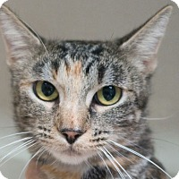 Adopt A Pet :: Jilly - Redwood City, CA