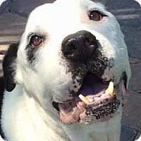 Adopt A Pet :: BAXTER-LS - Orlando, FL