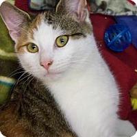 Adopt A Pet :: Maybelline - Westville, IN