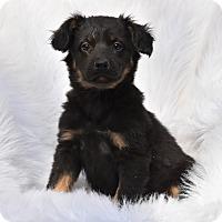 Adopt A Pet :: Luna - Groton, MA