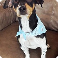 Adopt A Pet :: Scout in Fredericksburg - Austin, TX
