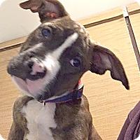 Adopt A Pet :: Otis - Cincinnati, OH