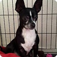 Adopt A Pet :: Mia - Lodi, CA