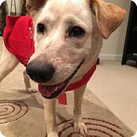 Adopt A Pet :: Princess Leia - Westminster, MD