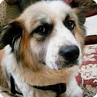Adopt A Pet :: POLLYANNA - Pompton Lakes, NJ