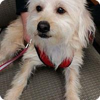 Adopt A Pet :: Cooper - Studio City, CA