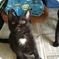 Adopt A Pet :: Isaac - Island Park, NY