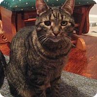 Adopt A Pet :: FridayCP - Carlisle, PA