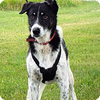 Adopt A Pet :: Buddy - Shelby, MI