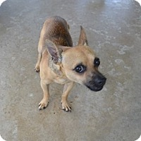 Adopt A Pet :: Rocky - Clermont, FL