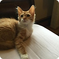 Adopt A Pet :: Molly - Absecon, NJ