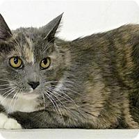Adopt A Pet :: Alice - Sedona, AZ