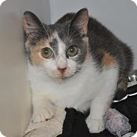 Adopt A Pet :: Lane - Suwanee, GA