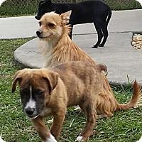 Adopt A Pet :: Carl - Weeki Wachee, FL