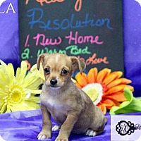 Adopt A Pet :: Shyla - DeForest, WI