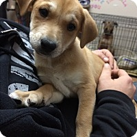 Adopt A Pet :: Timmy - Bernardston, MA