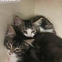 Adopt A Pet :: Sal & Sara - Walnut Creek, CA
