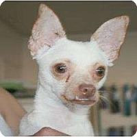 Adopt A Pet :: Harper - Canoga Park, CA