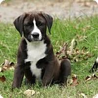 Adopt A Pet :: Mocha - Brattleboro, VT