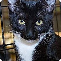 Adopt A Pet :: Dinah - Irvine, CA