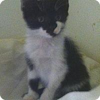 Adopt A Pet :: Loralee - Cocoa, FL