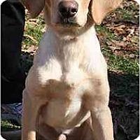 Adopt A Pet :: Dobie - Cumming, GA