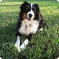 Adopt A Pet :: Hannah - Sarasota, FL
