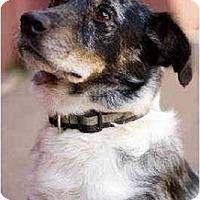 Adopt A Pet :: Fido - Portland, OR