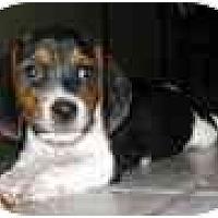 Adopt A Pet :: Scooter Ann - Phoenix, AZ