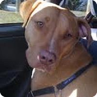 Adopt A Pet :: Karma - Grafton, MA