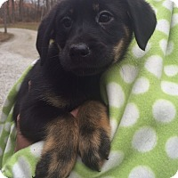 Adopt A Pet :: Mistletoe - Salem, MA